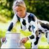 La mayor culpa es de la vaca