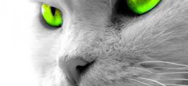 Los Gatos en peligro